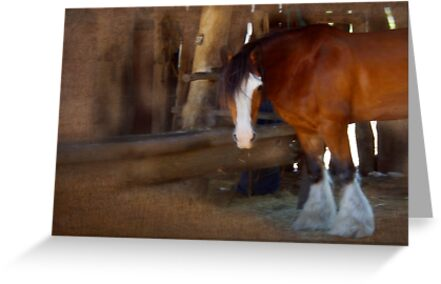 Bad Hair Day - Draught Horse by Mark Richards