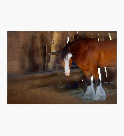 Bad Hair Day - Draught Horse Photographic Print