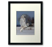 Snowy Owl II Framed Print