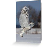 Snowy Owl II Greeting Card