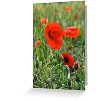 Red on Green Greeting Card