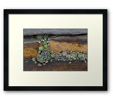 Plants Growing in a Stone Wall Framed Print