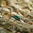 Love Bugs by DDLeach