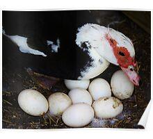 Tending the Eggs Poster