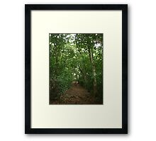 tranquill steep winding trail through the jungle Framed Print