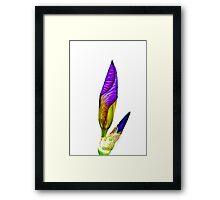 Iris, 2011 Framed Print