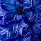 Beautiful Blue by sharon2121