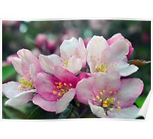 Flowers On A Crab Tree Poster