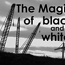 The Magic of Black And White---Cranes by the57man