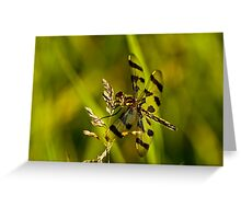 Brown Spotted Yellow-wing Dragonfly Greeting Card