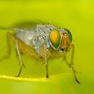 Fly Macro by Gabrielle  Lees