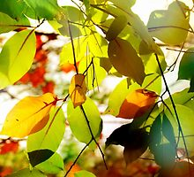 Autumn leaves by francelal