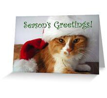 Season's Greetings Christmas Cat in Santa Hat Greeting Card
