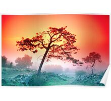 PINE IN FOG AT SUNSET Poster