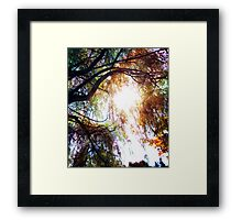 Wipping Willow Framed Print