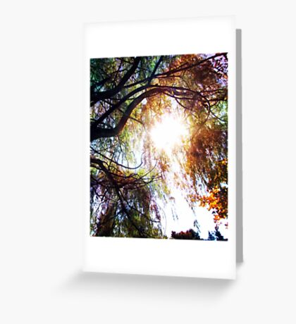 Wipping Willow Greeting Card
