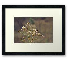 Pretty Weeds Framed Print