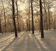 GOLDEN WINTER MORN 2 by NatureGreeting Cards ©ccwri
