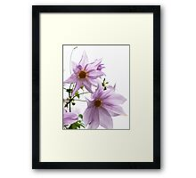 Tree Dahlia Framed Print