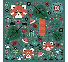 Red Panda & Cubs Photographic Print