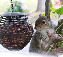 Nuts!!!!!!! by Stephen J  Dowdell