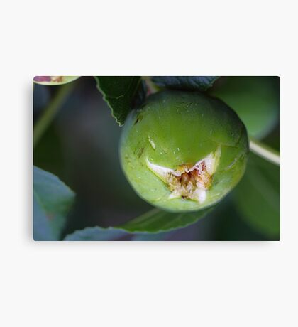 Syrup of figs. Canvas Print