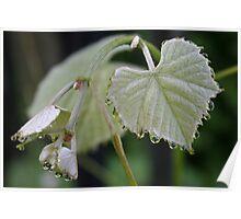 Grape Leaves 1 Poster