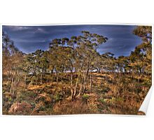 Bushland Dreaming - Rockley, NSW - The HDR Experience Poster