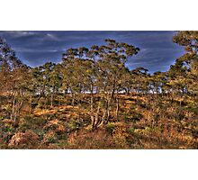 Bushland Dreaming - Rockley, NSW - The HDR Experience Photographic Print