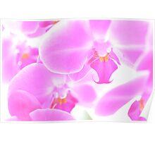 An Abundance of Orchids Poster