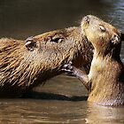 Mama Capybara with Her Baby by Paulette1021