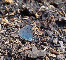 blue butterfly on bark by katiebm