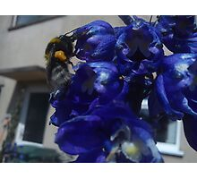 pollon carrying bee Photographic Print