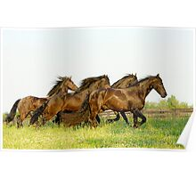 Running Friesian Horses Poster