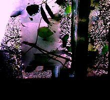 Spring Haiku by Spring-Spring