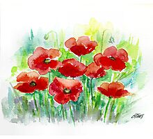 8 POPPIES - AQUAREL Photographic Print