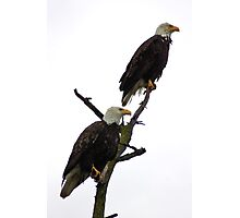 bald eagle pair in the rain Photographic Print