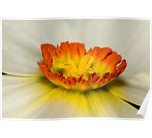 White daffodil crown Poster