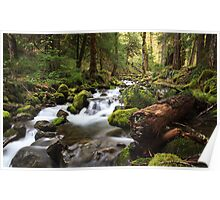 Paradise Creek, Skamania County, Washington Poster