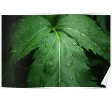 Water Drops-dark wet forest Poster