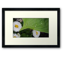 Water Drops-with white flowers Framed Print