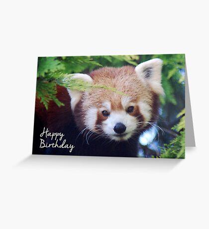 Red Panda Birthday Card Greeting Card