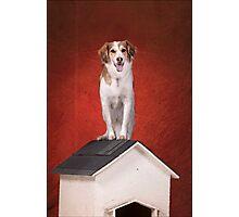 dog sits on house  Photographic Print