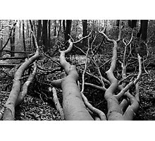 Reaching Out Photographic Print