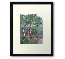 Wild Holly Tree - Outer Banks NC Framed Print