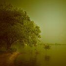tree family by Mustafa UZEL