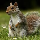 Give me a nut and I'll do this all day for you! by Mark Hughes