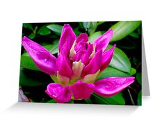 Rhododendron on the Verge  Greeting Card
