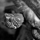 Turtle by Lindamell