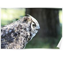 """Great Horned Owl - """"Gordon"""" Poster"""